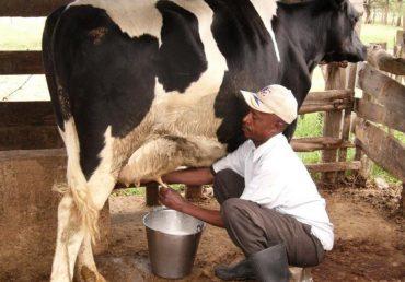 Tanzania registers impressive success in diary sub-sector